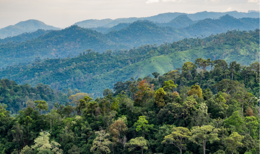 deforestation-cargill-supply-chain-theprocurement