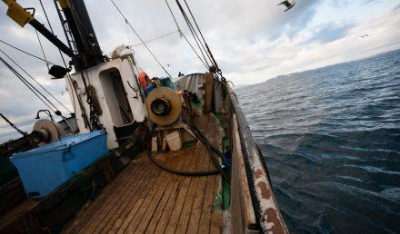 fishing-illegal-theprocurement
