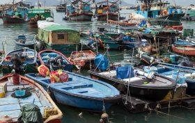 The Procurement -China Fish