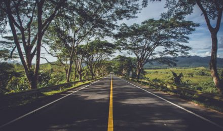Strada asfaltata tra i prati - ambiente