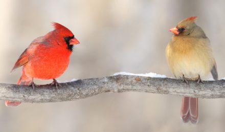 Uccellini su un ramo - buyer e fornitore