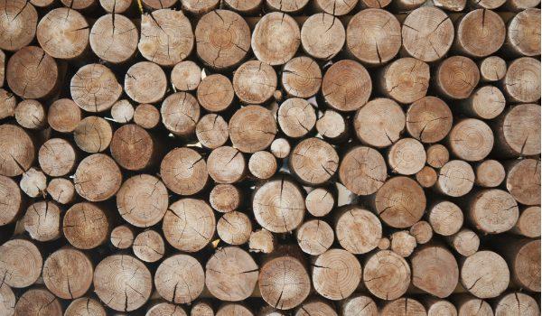 tronchi di legno_filiera del legno per la ripartenza