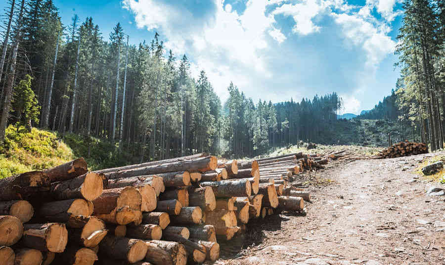 timber-source-buyer-procurement